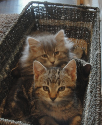 Kittens in a basket