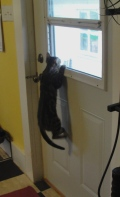 Cat hanging from door